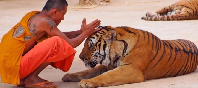 Thailanda – Templul tigrilor
