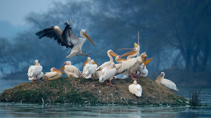 Bird Sanctuary. Sursă foto: http://www.cntraveller.in/story/20-stunning-ways-experience-india