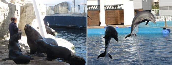 leones-marinos-y-delfines
