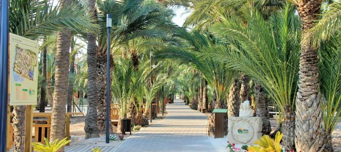 Elche Palmeral Aventuras – Palmierii din spatele aventurii