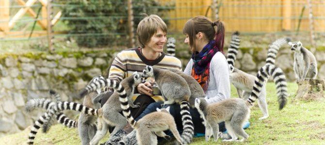 Grădina zoologică Sosto