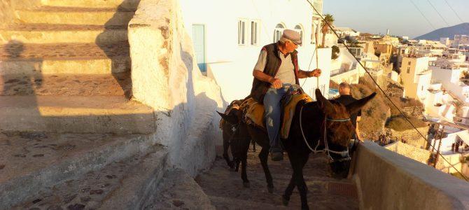 Santorini: povești despre vin, bărbați și… măgari